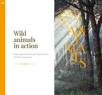 desain web warisan budaya, desain web tempat wisata, desain web kebun binatang, desain web zoo, desain web taman safari