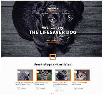 desain web toko binatang, desain web perawatan binatang, desain web penitipan hewan contoh web desain Contoh Web Desain desain web toko binatang